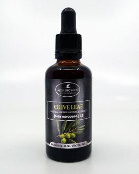 Olive leaf 1:2 Olea europaea